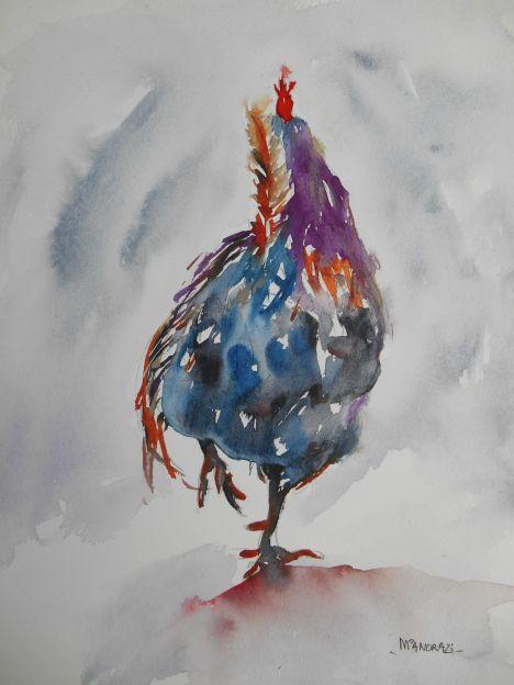 Coq de Promenois, Aquarelle 24x30