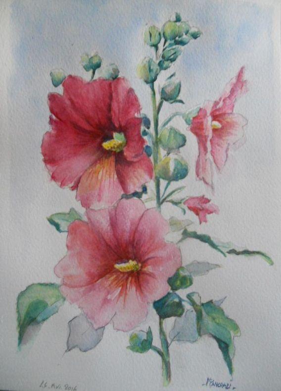 Rose Trémière, aquarelle 21x29,7