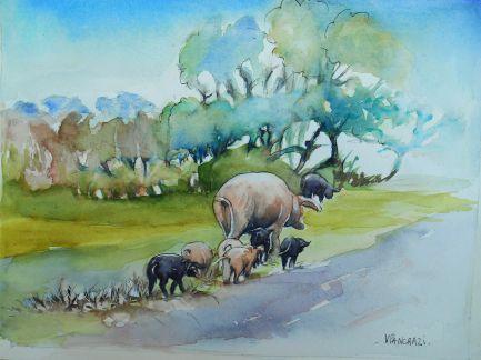 Cochons dans le Maquis, Aquarelle 24x32